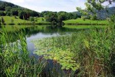 Colloque national à Brest «Réparer la nature»